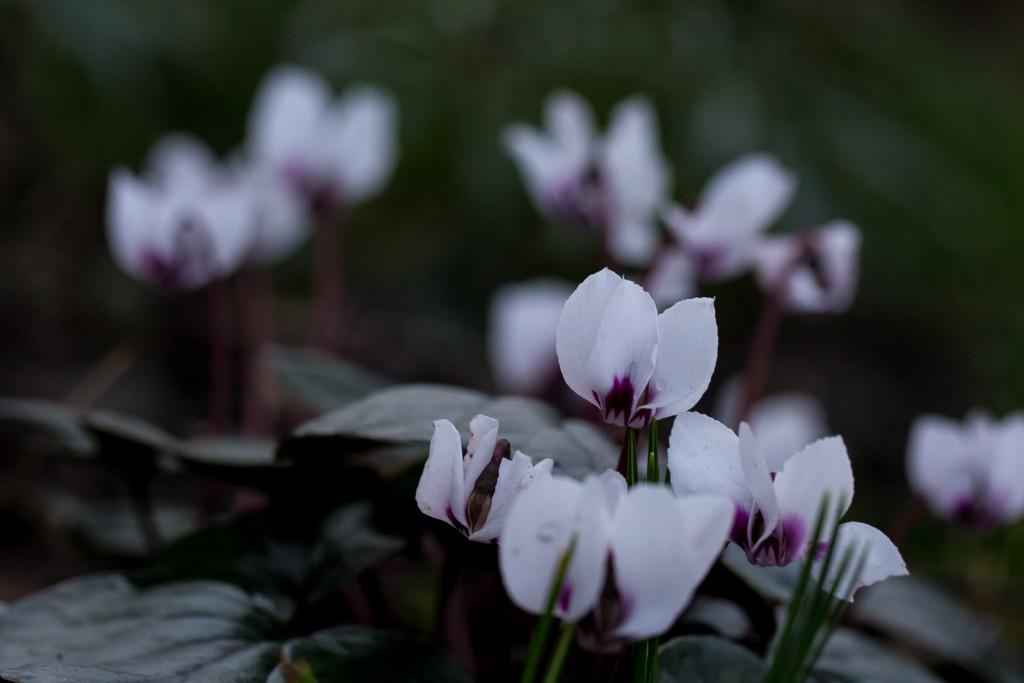 Garten-Februar-4725