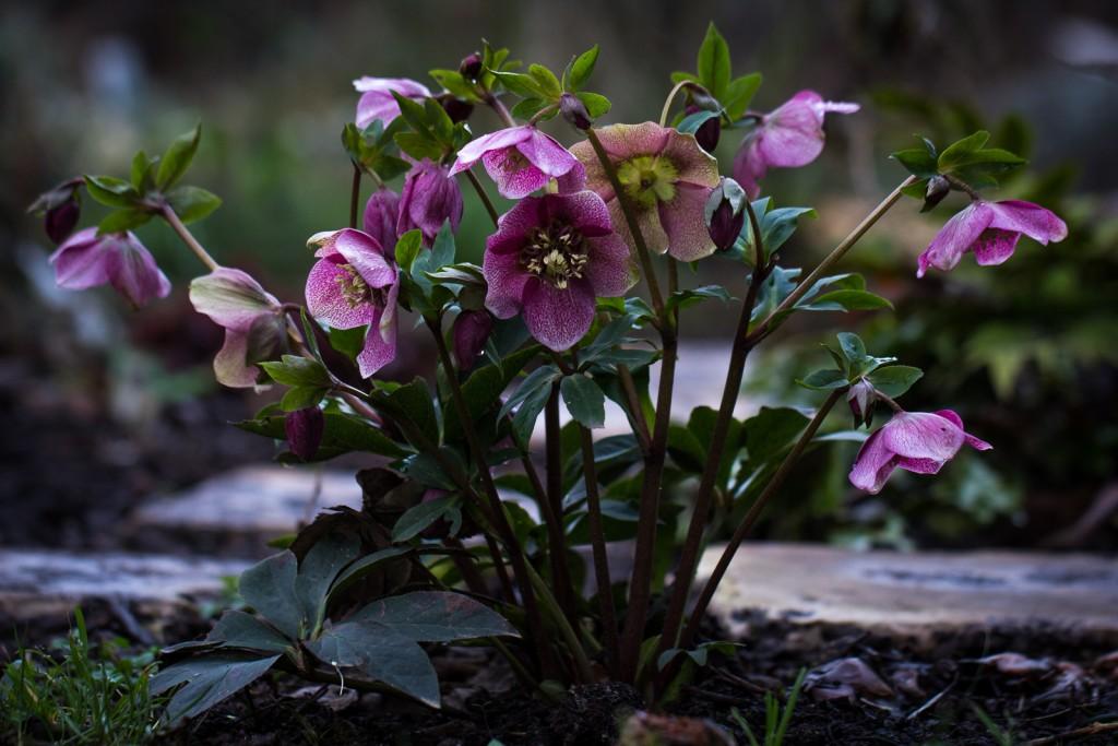 Garten-Februar-4734