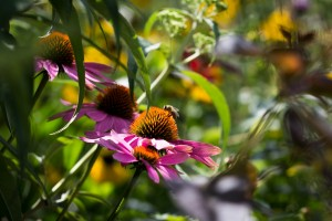 Stefane-Garten-Juli-2016-11