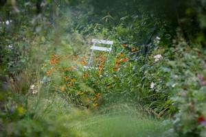 Stefane-Garten-Juli-2016-12