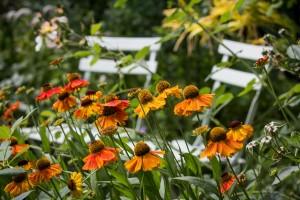 Stefane-Garten-Juli-2016-4