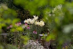 Stefane-Garten-Juli-2016-5
