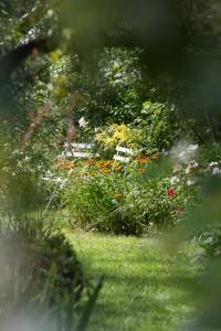 Stefane-Garten-Juli-2016-6